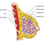 volufiline for bigger breasts